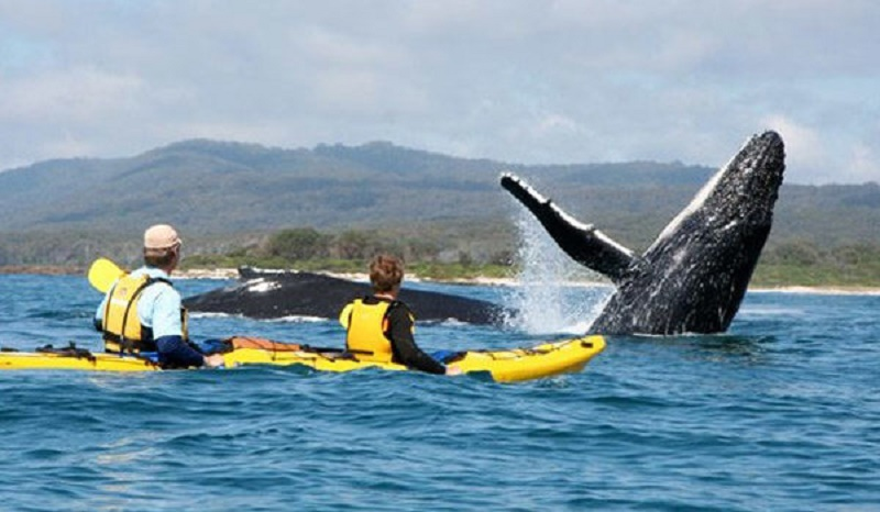 Kayaking in Cape Town