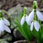 Signs of Spring to Spot on your Walks
